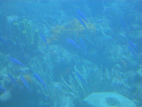 2013-01-11_AtlantisSubmarine60